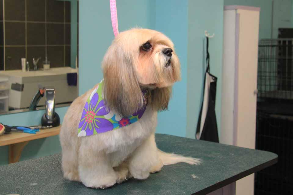 Dog grooming queensway etobicoke