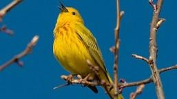 Spring Bird Festival